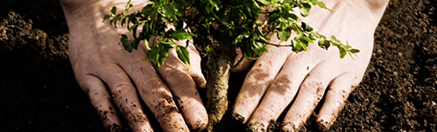 Tree-planting-5